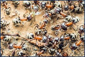 Schutz vor Einnisten von Insekten